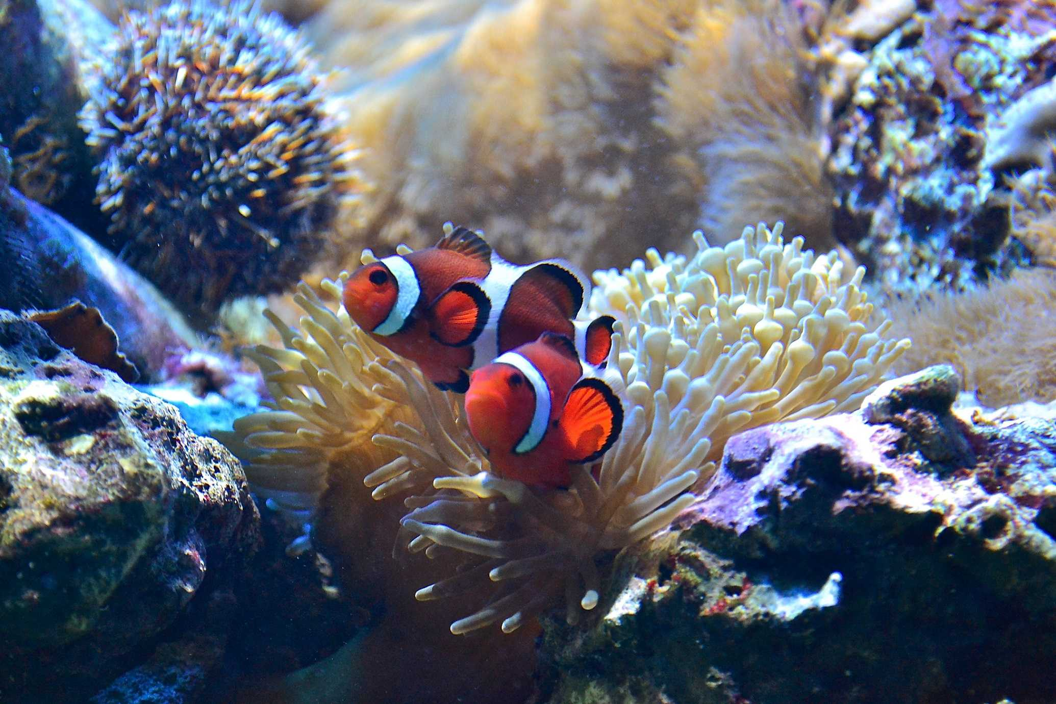 what is marine biology and how to get into it