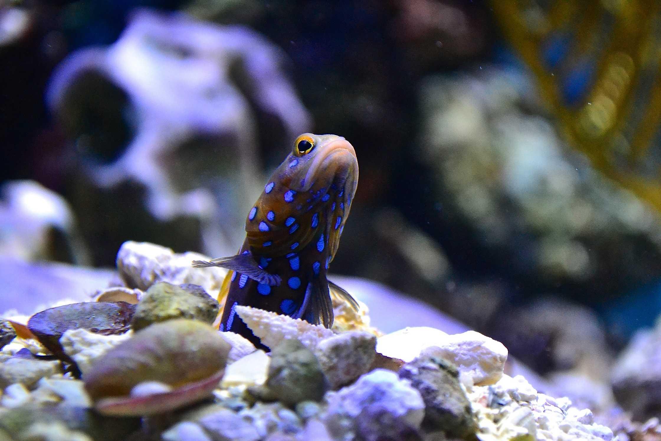 Lil Fish Guy