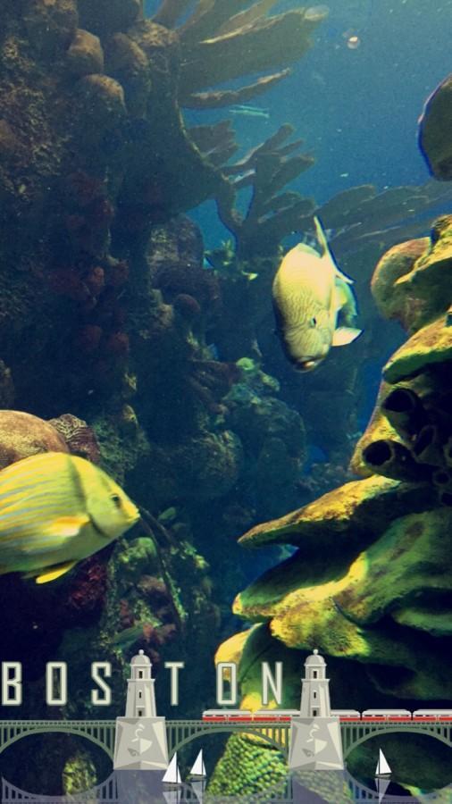 New England Aquarium Field Trip