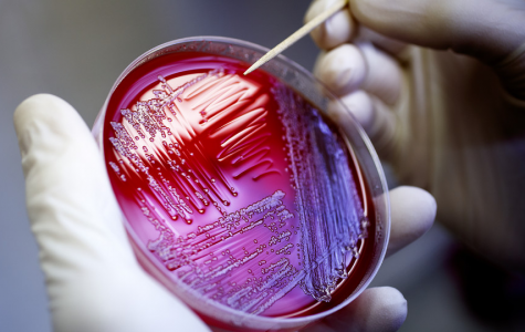 The Rise of E. coli Outbreaks