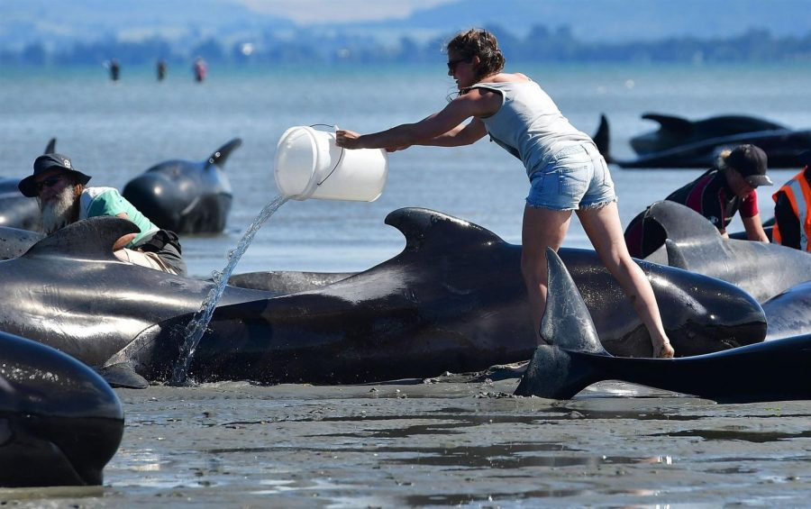 Dead+Whales+in+New+Zealand